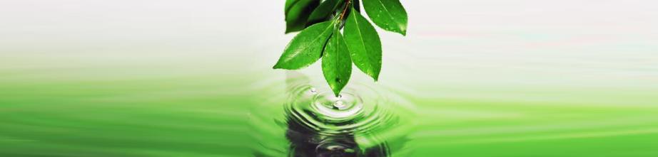 Artigo sobre ecologia